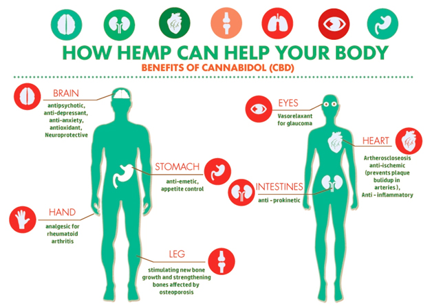 Ask the Expert: What Does CBD Really Do ...